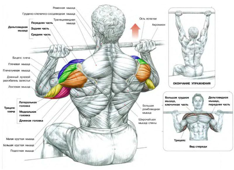 мышцы, задействованные в армейском жиме