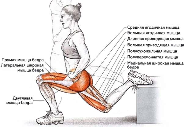 Болгарские выпады задействованные мышцы