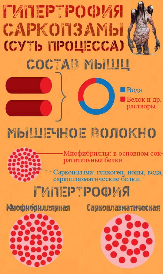 Миофибриллярная и саркоплазматическая гипертрофии